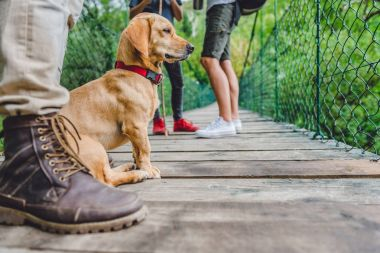 Small yellow dog with his owners sitting on the wooden suspension bridge and looking at distance