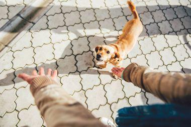 Owner calling dog