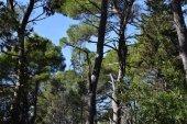 Italia, pini, abeti, cipressi, alberi tipici delle foreste delle montagne dellAppennino