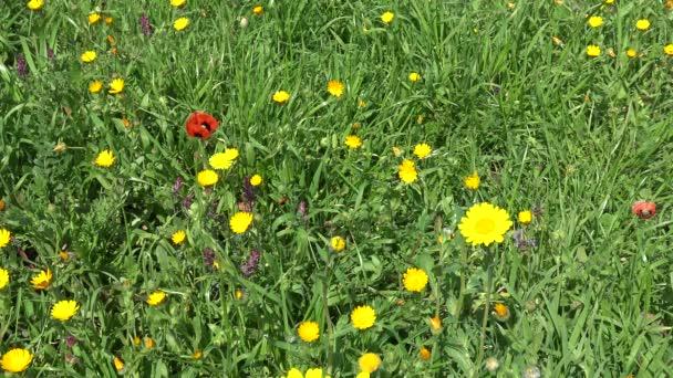 4 k jarní květy. Divoké květy v přírodě přistane.
