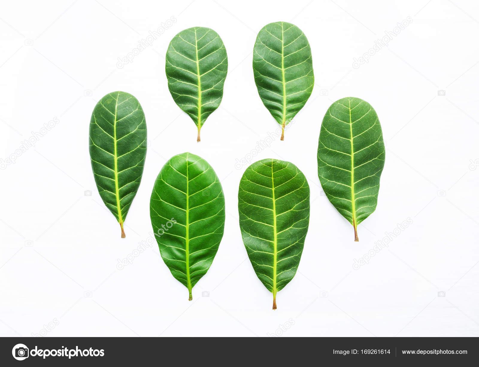 Venature Gialle Di Anacardi Foglie Verdi Su Fondo Di Legno Bianco