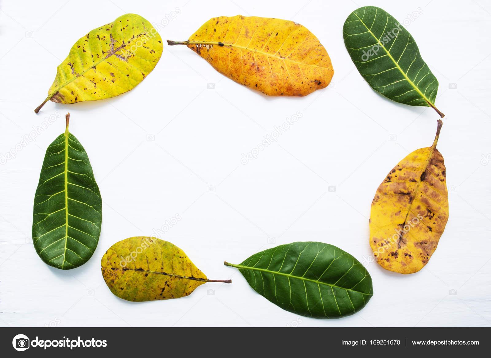 Marco, Hojas Verdes Y Amarillas De Marañón Sobre Fondo