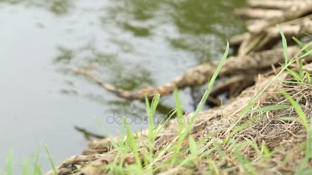 szitakötő a zöld fű.