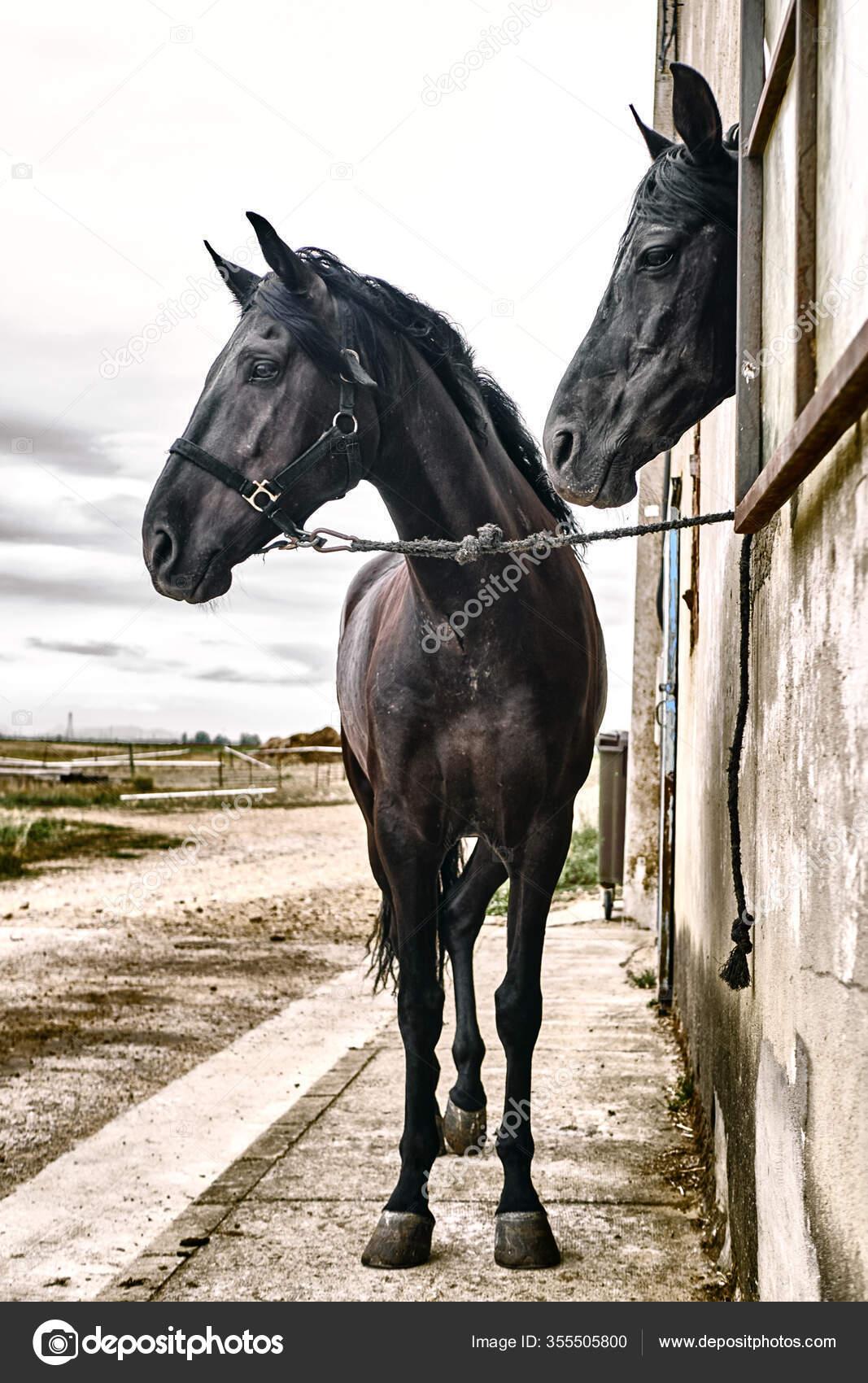 Beautiful Horses Animals Stables Stock Photo C Esp2k 355505800