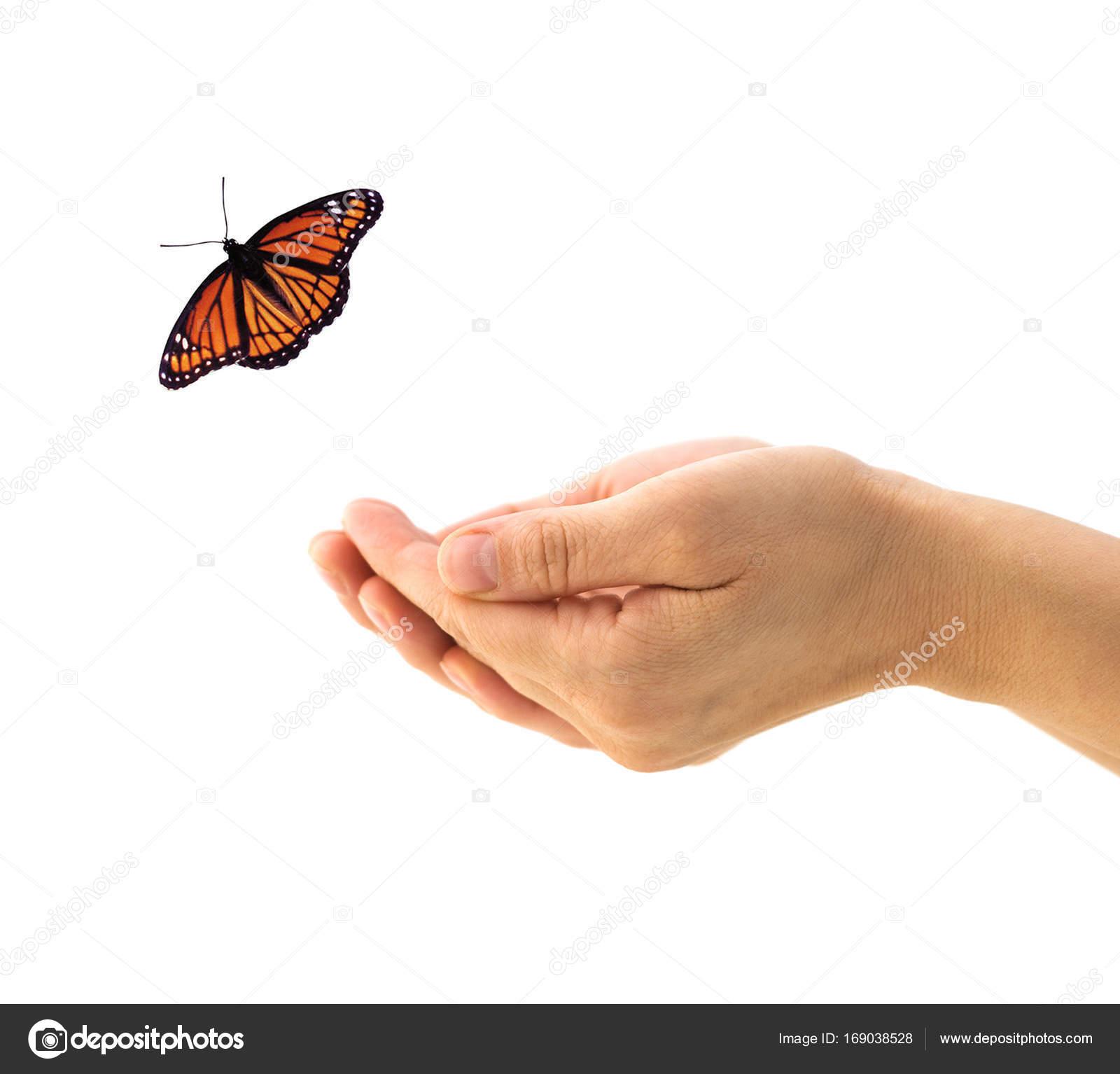 Mariposa Real Para Colorear Manos Liberando Mariposa Monarca