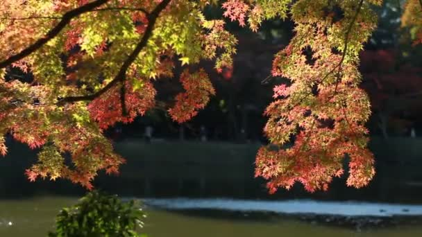 Podzimní listí v japonské zahradě na Kiyosumishirakawa. / Své tradiční místo v Japonsku. fotoaparát: Canon Eos 7d