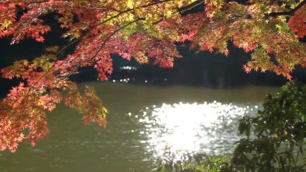 Podzimní listí nedaleko jezera u Kiyosumishirakawa úzké zastřelených mělké zaměření. / Své tradiční místo v Japonsku. fotoaparát: Canon Eos 7d