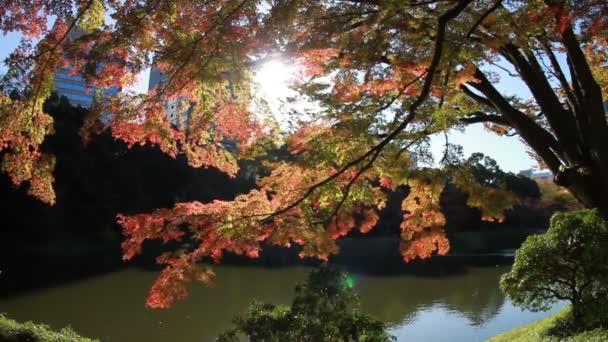 Na podzim listy poblíž jezera u Kiyosumishirakawa široký záběr. / Své tradiční místo v Japonsku. fotoaparát: Canon Eos 7d