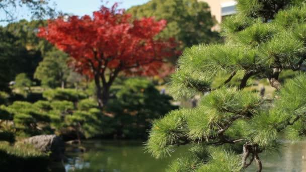 Japonská zahrada včetně červené listy v Kiyosumishirakawa zpět mělké focus / své tradiční místo v Japonsku. fotoaparát: Canon Eos 7d