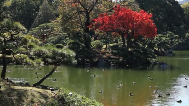 Japonská zahrada včetně červené listy v Kiyosumishirakawa / své tradiční místo v Japonsku. fotoaparát: Canon Eos 7d