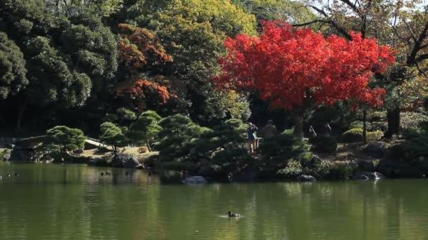 Japonská zahrada včetně červené listy v Tokiu öirok˝ záběr standardní vstup / své tradiční místo v Japonsku. fotoaparát: Canon Eos 7d