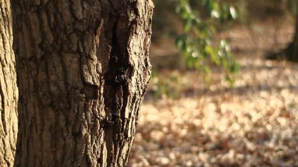 Les v Tachikawa park / jeho přírodní lokalita v Tokiu. fotoaparát: Canon Eos 7d
