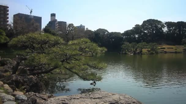 Japonská zahrada za budovy v Kiyosumi Shirakawa. / Jeho tradiční park v Tokiu. fotoaparát: Canon Eos 7d