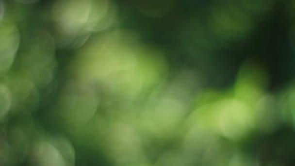 Boke lesa na Shinagawa svatyně v Tokiu