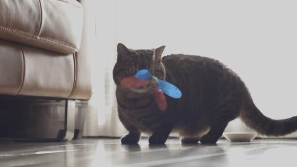 Katze im Haus / Katze im Wohnzimmer. Kamera: canon eos 5d