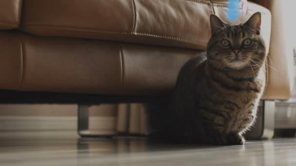 Kočka v domě / jeho kočka v obývacím pokoji. fotoaparát: Canon Eos 5d