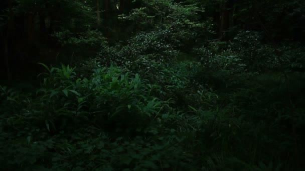 Potok v Minamisawa lese v Higashikurume v Tokiu / jeho přírodní lokalita v Tokiu. fotoaparát: Canon Eos 7d