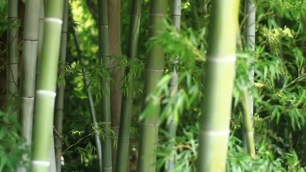 Bamboo in the forest at Takebayashi park in Tokyo  / Its a nature location in Tokyo. camera : Canon EOS 7D