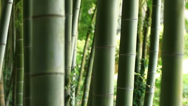 Bambus v lese na Takebayashi parku v Tokiu / jeho přírodní lokalita v Tokiu. fotoaparát: Canon Eos 7d