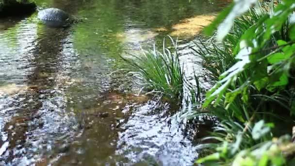 Potok na Takebayashi park v Tokiu / jeho přírodní lokalita v Tokiu. fotoaparát: Canon Eos 7d