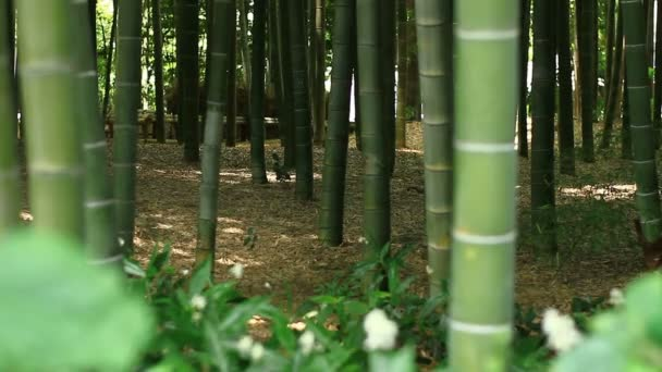 Bamboo forest at Takebayashi park in Tokyo  / Its a nature location in Tokyo. camera : Canon EOS 7D
