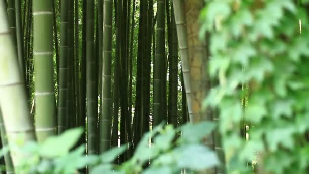 Bambusz erdő Takebayashi Park Tokyo / a természeti környezetben Tokióban. fényképezőgép: Canon Eos 7d