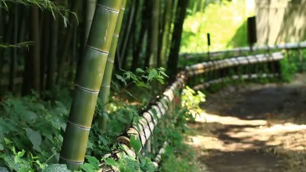 Bambusový Les Takebayashi Park v Tokiu / jeho přírodní lokalita v Tokiu. fotoaparát: Canon Eos 7d
