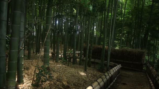 Bambuswald im Takebayashi Park in Tokio / es ist ein Naturstandort in Tokio. Kamera: canon eos 7d