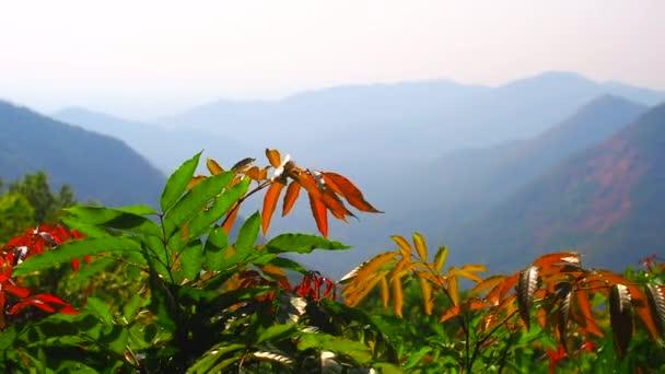 slunce svítí na čajovníku listy s horským a kopcovitým pozadím