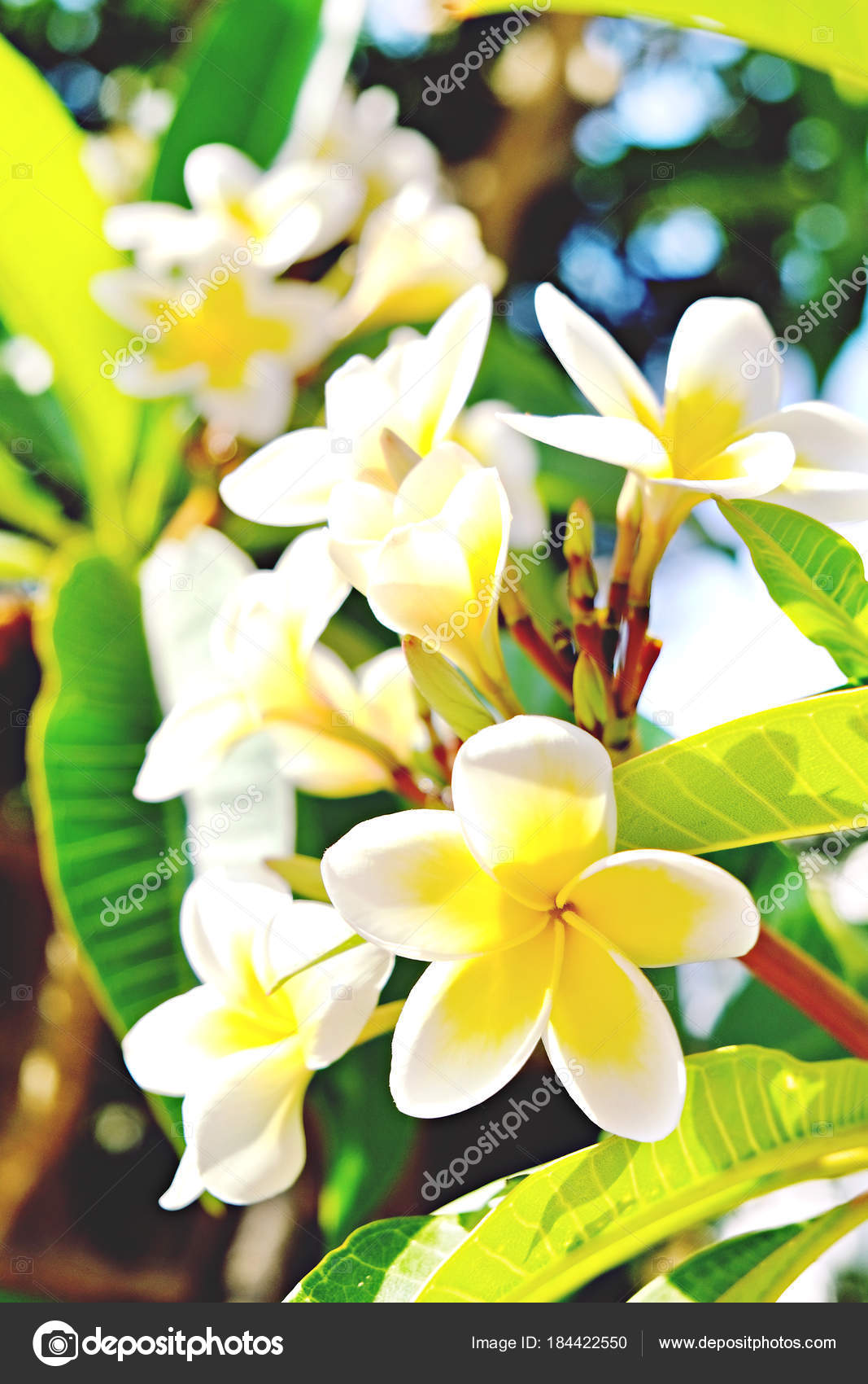 Exotic Flowers From Tropical Contries You Deserve A Vocation