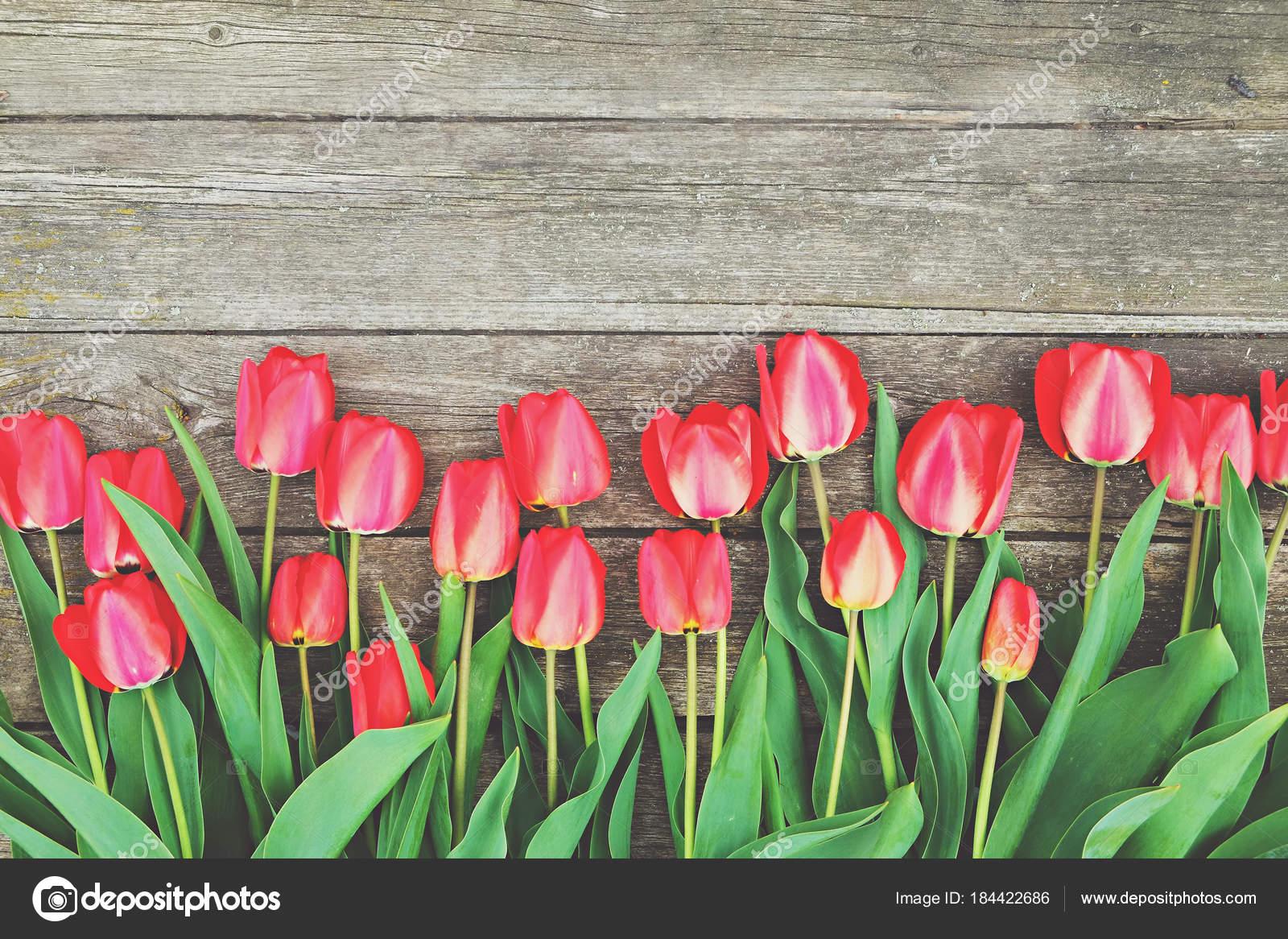 Wiersz Kwiaty Jasne Bogaty Czerwony Tulipan Na Pniu