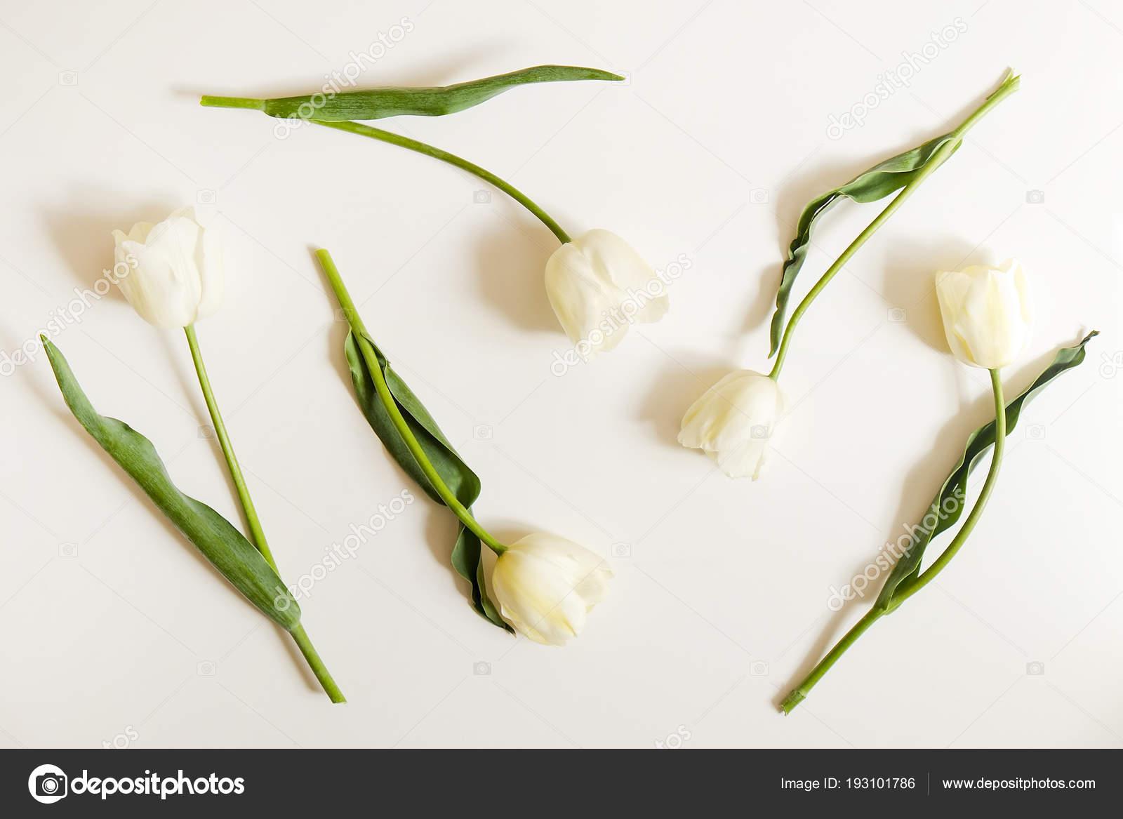 Настоящий женский цветок крупным планом #9