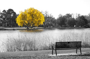 Golden yellow tree in black and white landscape scene with an em