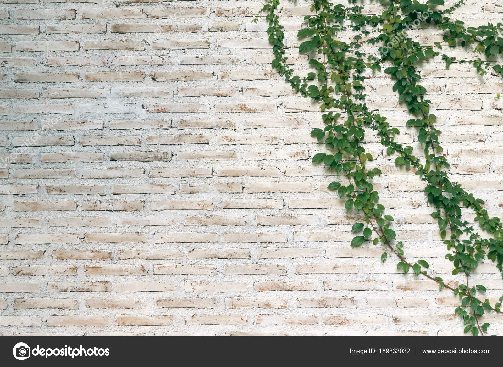 mur est brique puis peinte blanc les plantes grimpantes. Black Bedroom Furniture Sets. Home Design Ideas