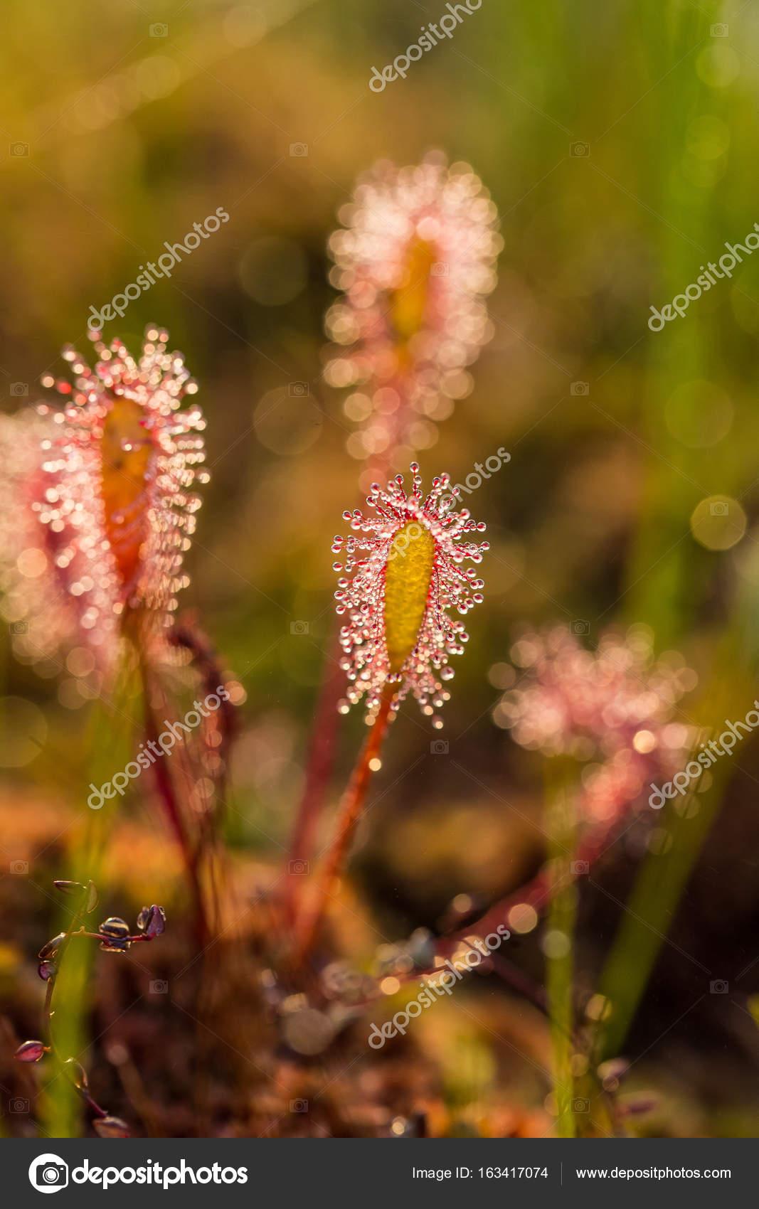 plante carnivore lumiere