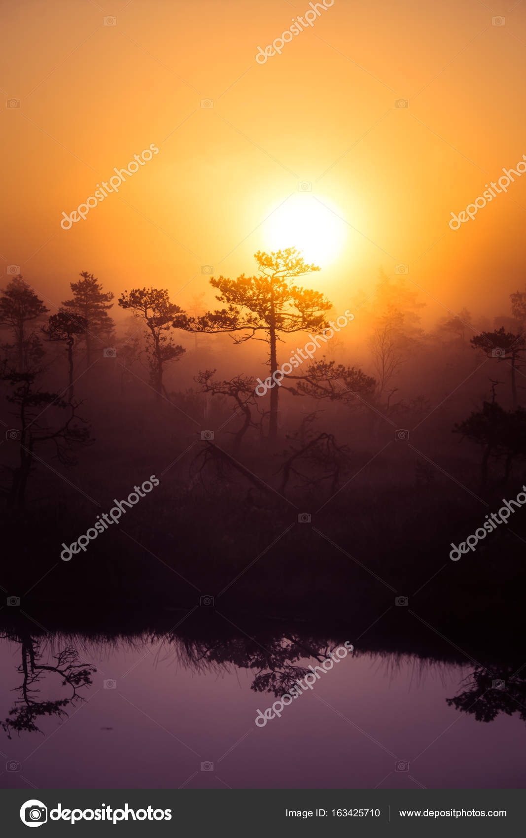a beautiful, dreamy morning scenery of sun rising above a misty