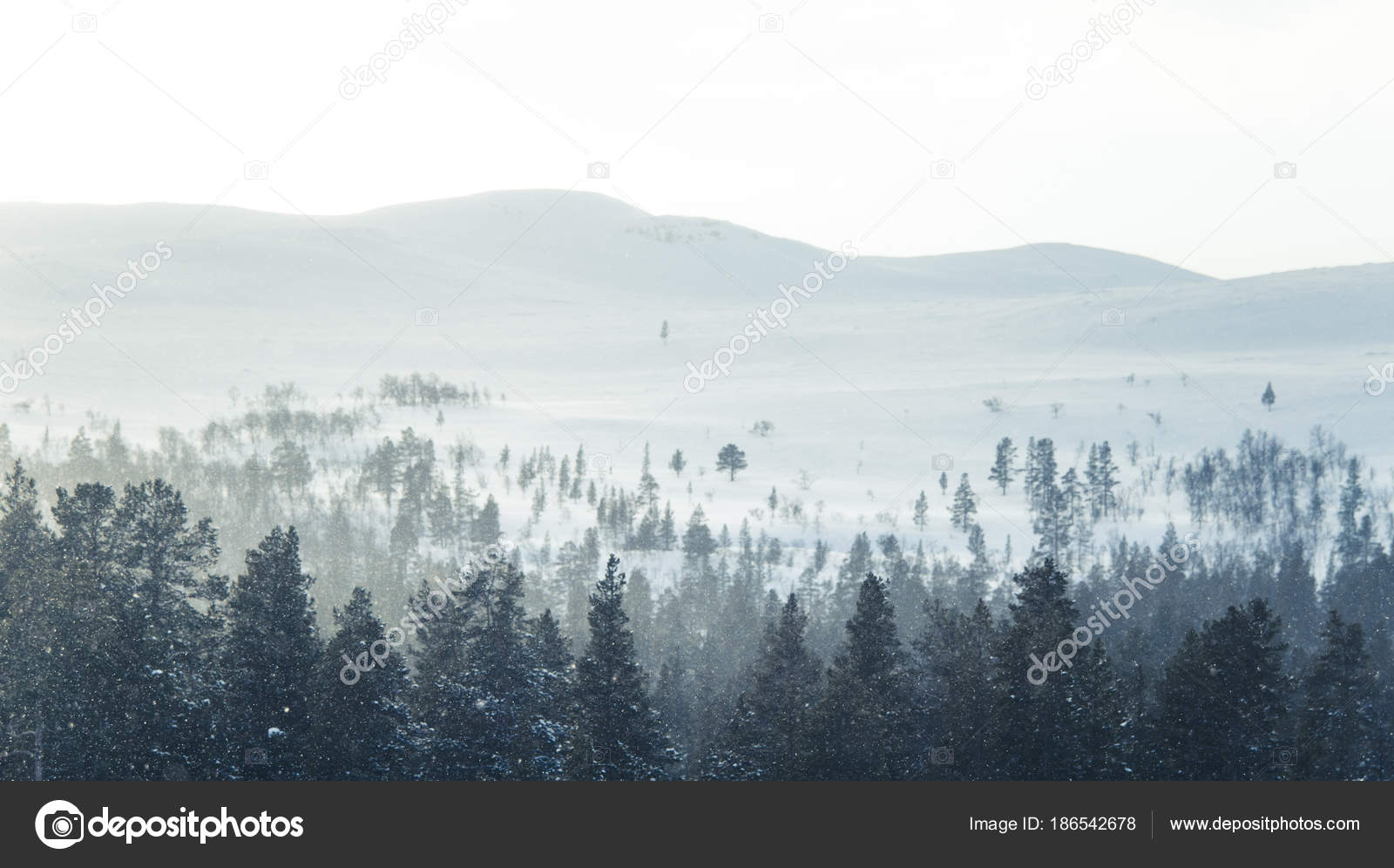 Beautiful Winter Landscape Snowy Trees Mountains Distance Central Norway Stock Photo Image By Romija 186542678