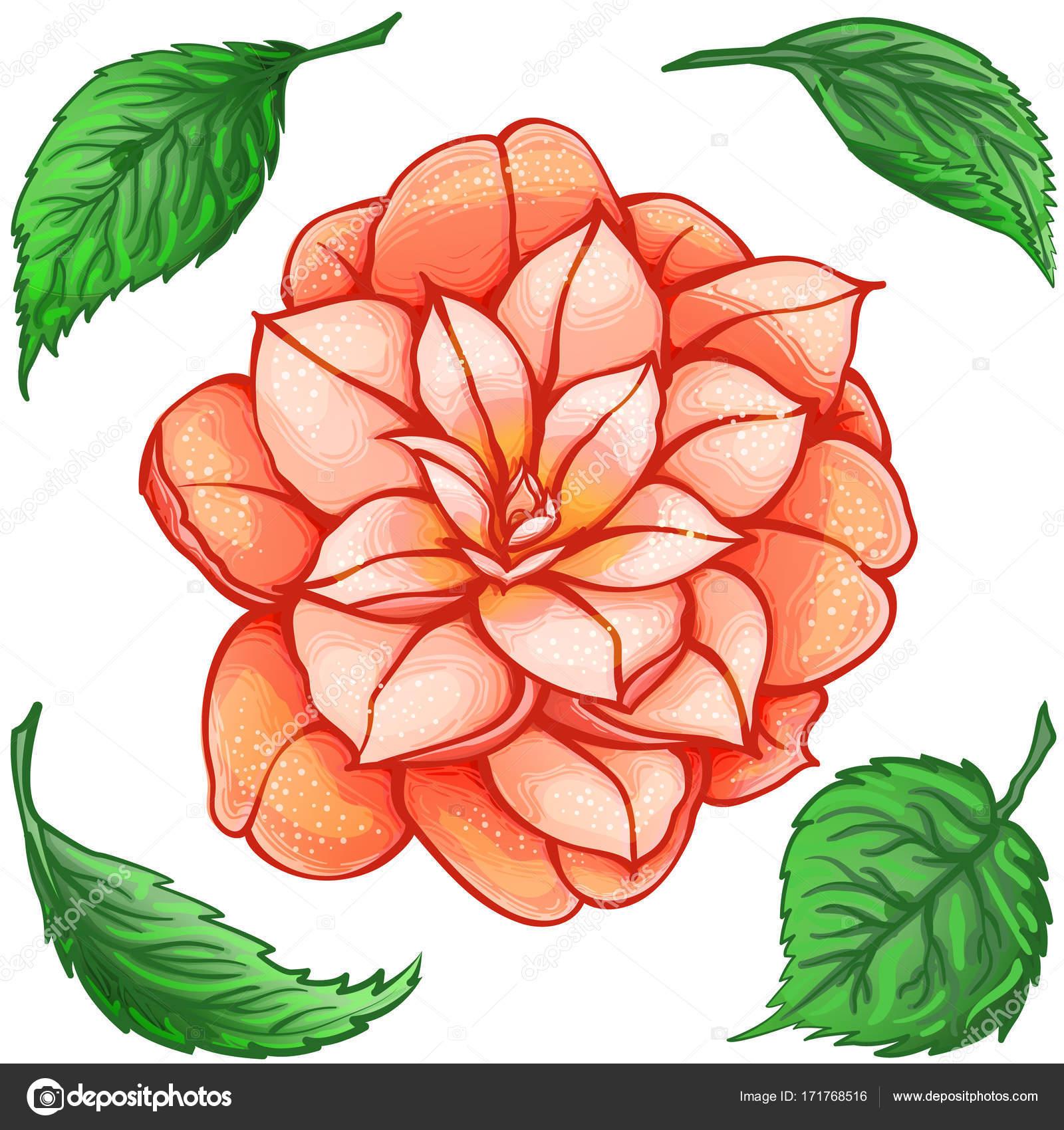エキゾチックな花緑の葉と椿楽園のオレンジ色の花 ストック