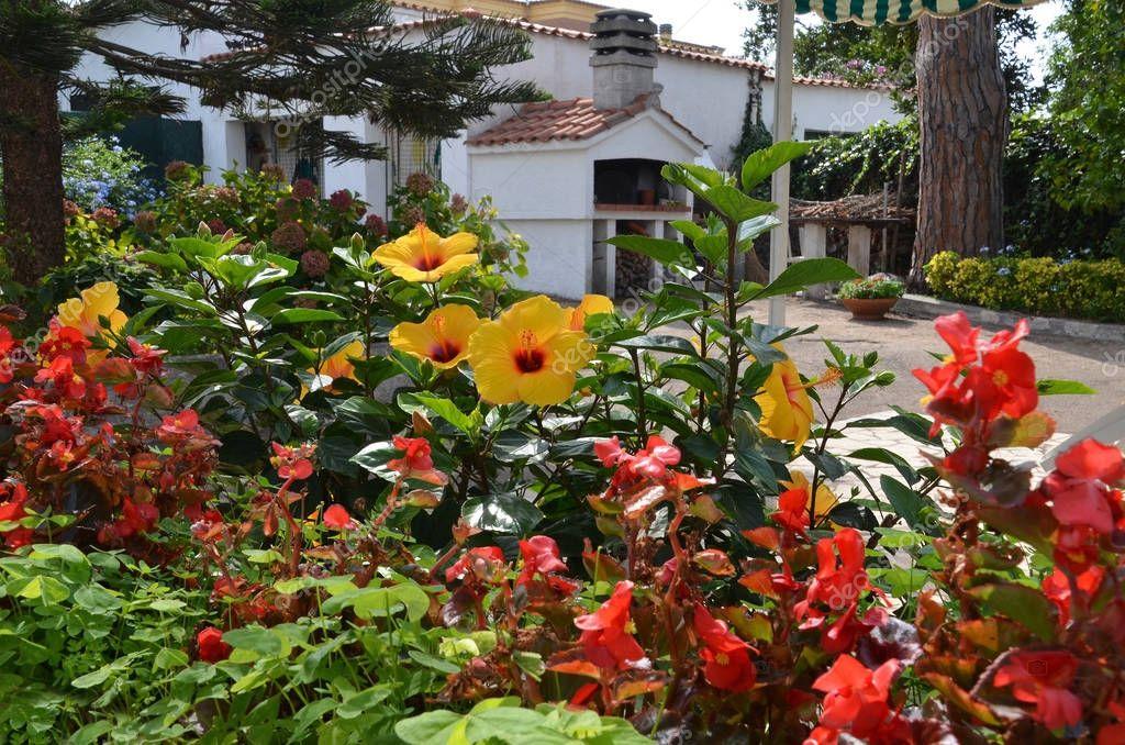 flowery garden in italy