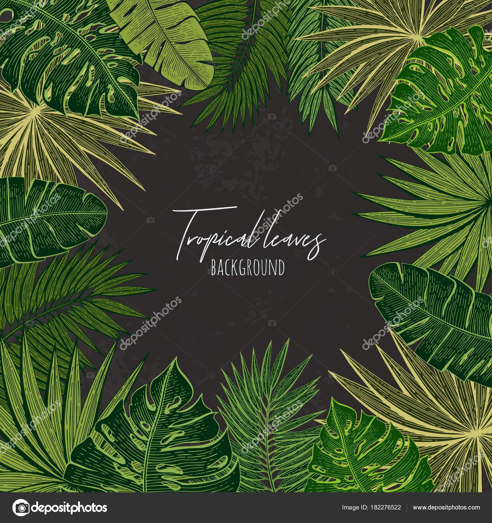 Marco verde floral con hojas tropicales. Plantilla de botánico ...