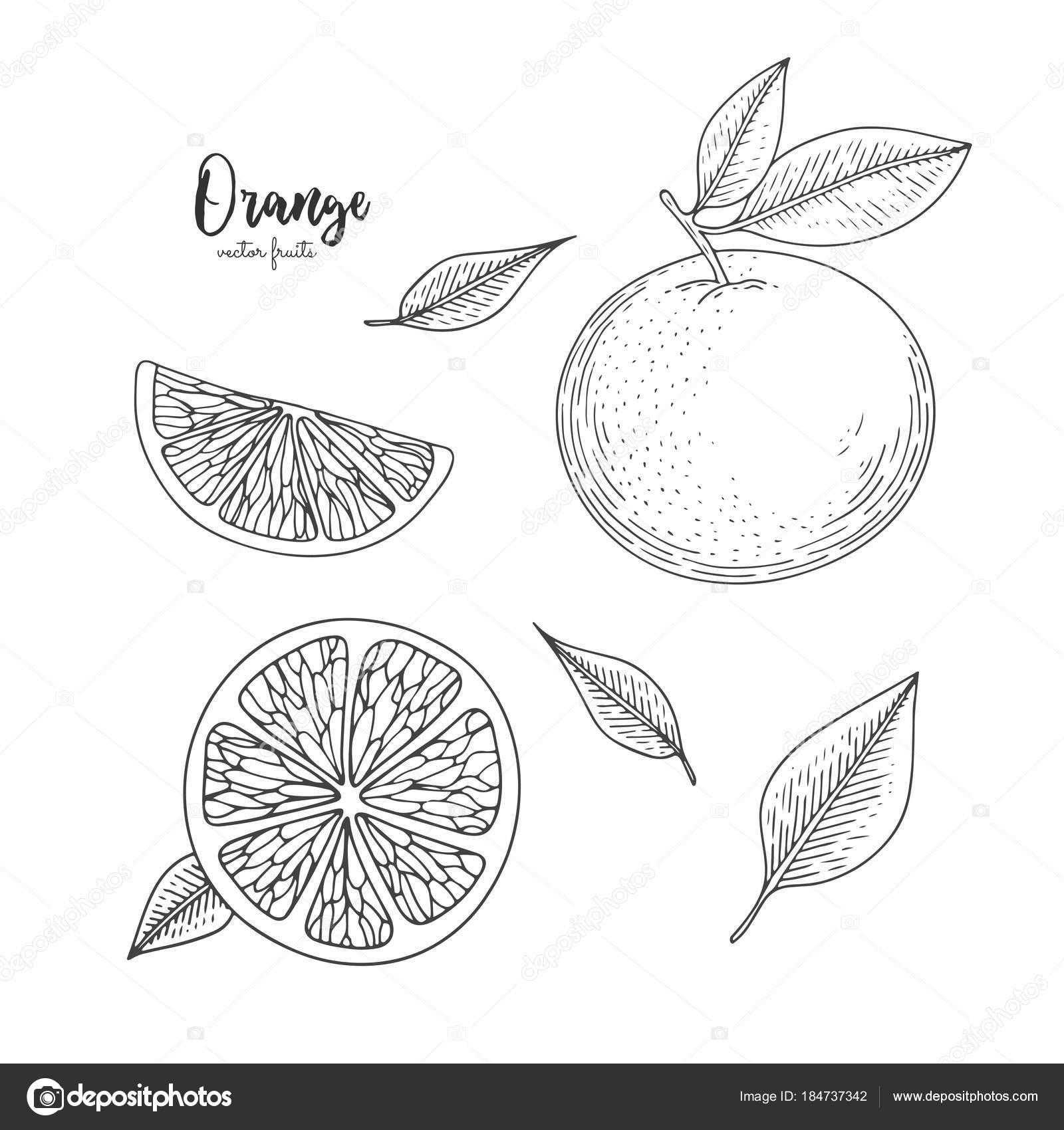 Imágenes Etiquetas De Productos Para Colorear Ilustración