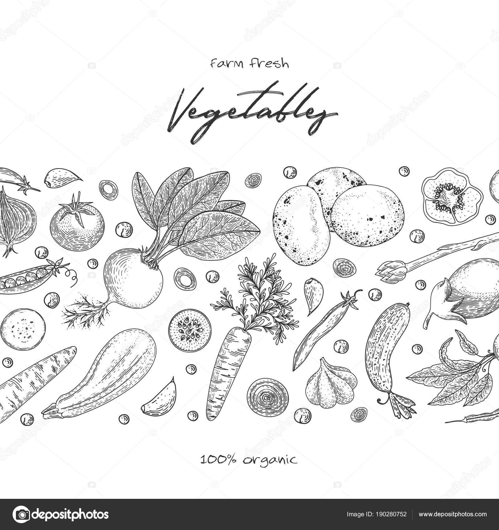 organic food design template fresh vegetables hand drawn