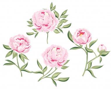 stock photo of tender pink peony. peonies set of hand drawn Bota