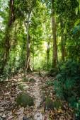 Národní park Khao Phanom Bencha