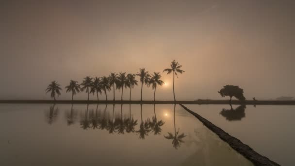Timelapse sunrise row of coconut trees with mist in reflection