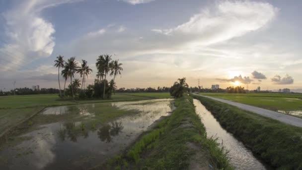Timelapse kokosové farmy zaplavila
