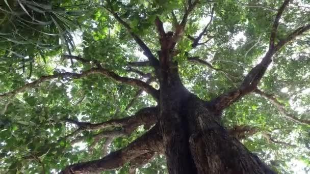 Rotační pohyb směrem ke středu stromu.
