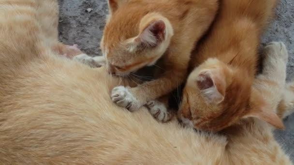 Zavřete hrdou kočku a dvě koťátka pijící mléko.