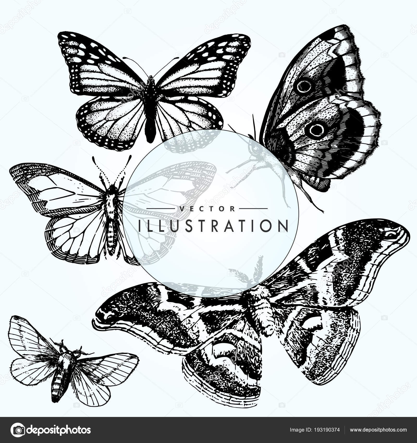 ac921f3134bd2 Set Sketch Tattoo Butterfly Beautiful Insects Vector Layout — Stock Vector