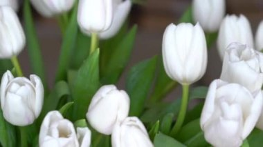 White tulips rotate in a slow motion